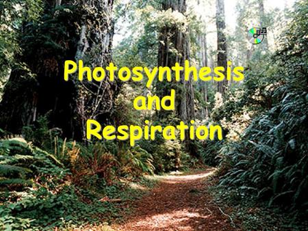 Photosynthesis and Respiration. What you will learn: Photosynthesis and Cellular Respiration are complementary processes that depend on each other.