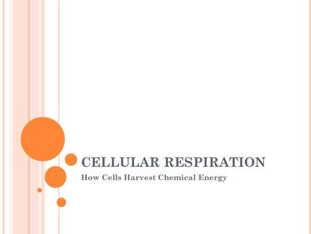CELLULAR RESPIRATION How Cells Harvest Chemical Energy.