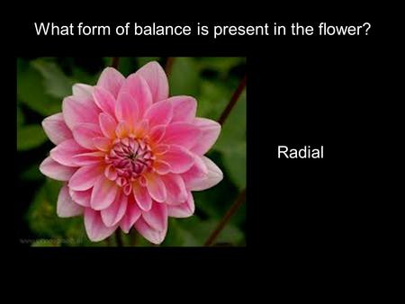 What form of balance is present in the flower? Radial.