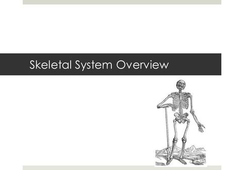 Skeletal System Overview. Bones are alive  These are dead bones  These are living bones.
