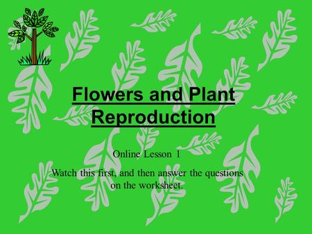 Flowers and Plant Reproduction Online Lesson 1 Watch this first, and then answer the questions on the worksheet.