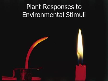 Plant Responses to Environmental Stimuli. The Response to Light— The Action Spectrum.
