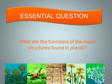 What are the functions of the major structures found in plants? ESSENTIAL QUESTION.