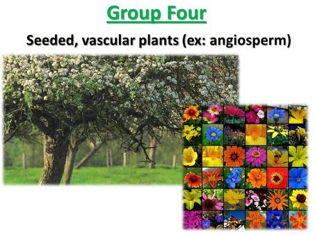 Group Four Seeded, vascular plants (ex: angiosperm)
