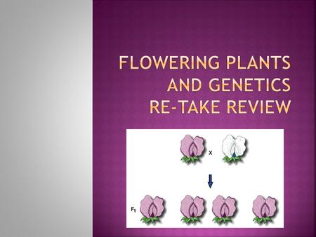  The reproductive structures of plants called angiosperms.