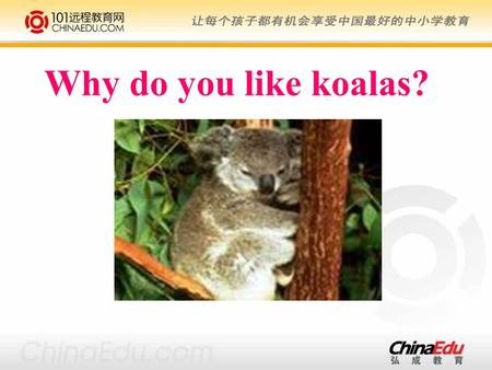 Why do you like koalas?. lion & tiger panda penguin giraffe bear monkey elephant Beijing zoo.