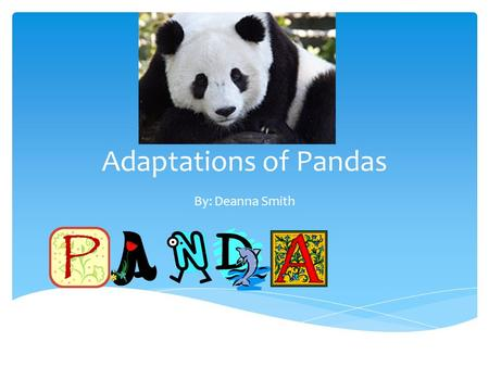 Adaptations of Pandas By: Deanna Smith. Head A panda's head is very large because bamboo is a very hard, thick plant, and they need very large jaws to.