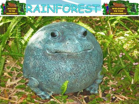 WHAT IS THE RAINFOREST? Tropical rainforests are forests with tall trees, warm climates, and lots of rain. In some rainforests it rains more than one.