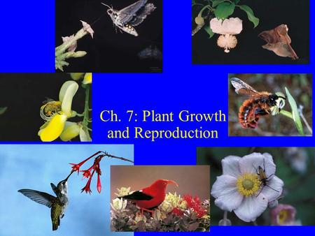 Ch. 7: Plant Growth and Reproduction. Terms Biotic pollination: pollen carried animal--90% flowering plants.