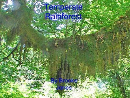 Temperate Rainforest By Brooke Jones.