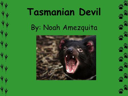 Tasmanian Devil By: Noah Amezquita. Description A Tasmanian Devil is a mammal with black fur. Some of them have white markings on their necks and shoulders.