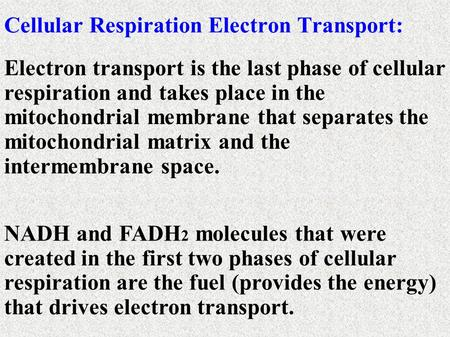 Electron transport is the last phase of cellular respiration and takes place in the mitochondrial membrane that separates the mitochondrial matrix and.