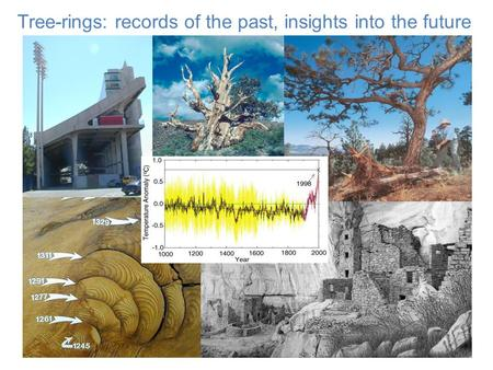 Tree-rings: records of the past, insights into the future