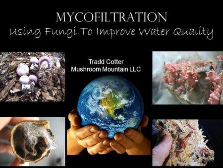 MYCOFILTRATION Using Fungi To Improve Water Quality Tradd Cotter Mushroom Mountain LLC.