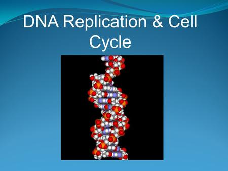 DNA Replication & Cell Cycle. Preparing and Dividing the DNA Each chromosome consists of two identical chromatids, joined by a centromere In human mitosis,