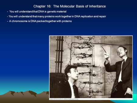 Chapter 16: The Molecular Basis of Inheritance - You will understand that DNA is genetic material - You will understand that many proteins work together.