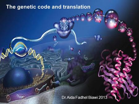 The genetic code and translation Dr.Aida Fadhel Biawi 2013.