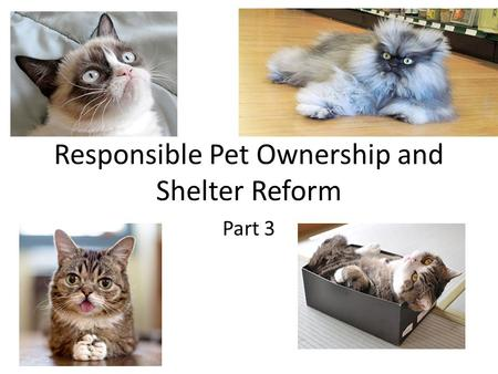 Responsible Pet Ownership and Shelter Reform Part 3.