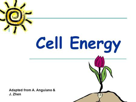Cell Energy Adapted from A. Anguiano & J. Zhen All organisms need energy to live.
