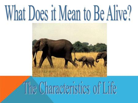 WHICH THINGS ARE ALIVE? All living things share some basic properties. Cellular Organization Cellular Organization Reproduction Reproduction Metabolism.
