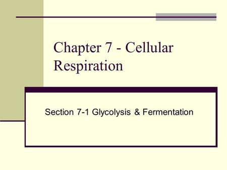 Chapter 7 - Cellular Respiration Section 7-1 Glycolysis & Fermentation.
