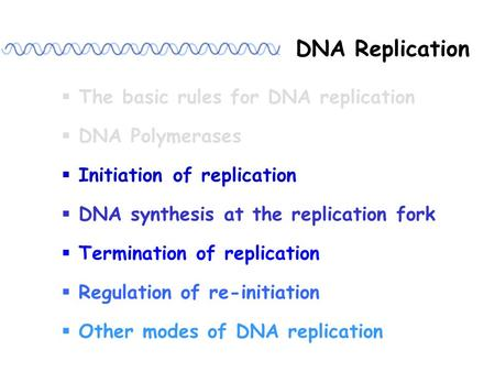 DNA Replication  The basic rules for DNA replication