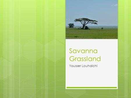 Savanna Grassland Yousser Louhaichi. Biome  Definition: A major ecological community of organisms adapted to a particular climate on a large geographic.