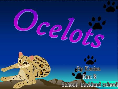 The Ocelot is distributed over South and Central America and Mexico, but has been reported as far north as Texas and in Trinidad, in the Caribbean. Countries.