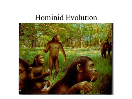 Hominid Evolution. Humans did not evolve from monkeys but from apelike ancestors that evolved independently of the pro-simians 25 million years ago,