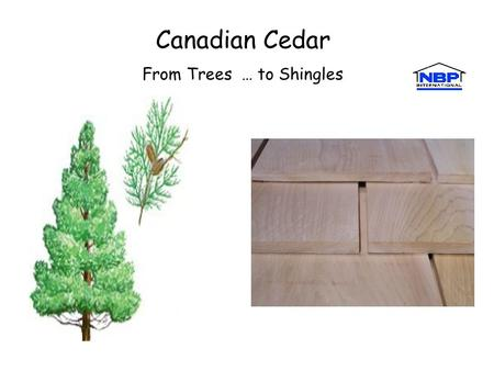 By Barry James Canadian Cedar From Trees … to Shingles.