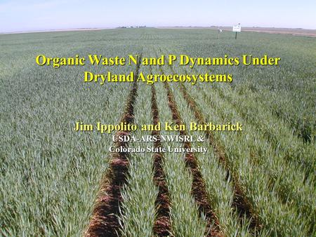Organic Waste N and P Dynamics Under Dryland Agroecosystems Jim Ippolito and Ken Barbarick USDA-ARS-NWISRL & Colorado State University.