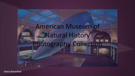 American Museum of Natural History Photography Collection Diana Rosenthal.