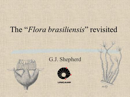 "The ""Flora brasiliensis"" revisited G.J. Shepherd."