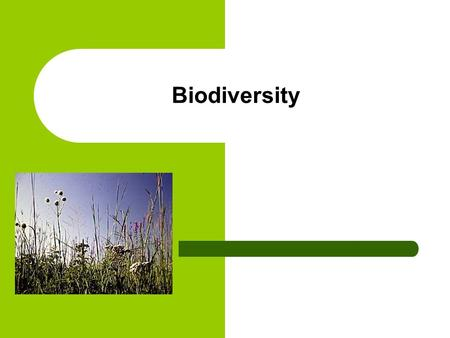 Biodiversity. How do Biotic and Abiotic factors affect communities?