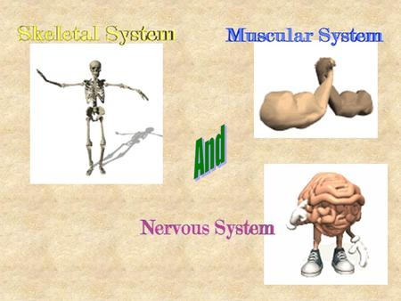 FUN FACTS: Skeletal System The bones in your body are not white - they range in color from beige to light brown. The adult skeleton contains 206 bones,