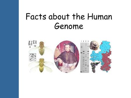 Facts about the Human Genome.