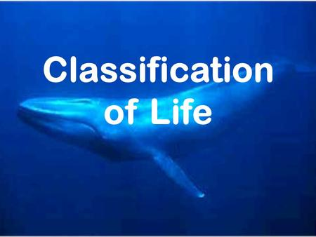 Classification of Life. Warm Up What do you think a has in common with a ?