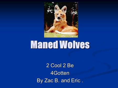 Maned Wolves 2 Cool 2 Be 4Gotten By Zac B. and Eric.