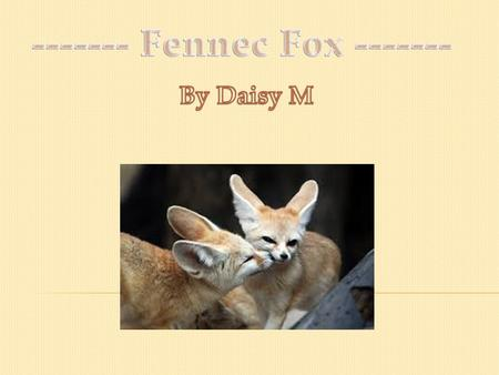 Fennec foxes are very cute animals. They are the smallest foxes in the world, but their large ears are 15 centimetres!!! Fennec foxes dwell in the sandy.