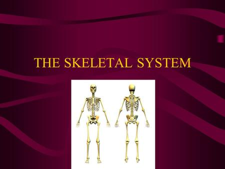 THE SKELETAL SYSTEM. Purpose of the Skeletal System Provides structure, support, and protection for the body Involved in movement Bones make new blood.
