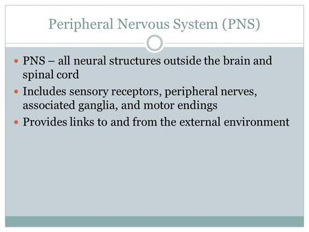 Peripheral Nervous System (PNS) PNS – all neural structures outside the brain and spinal cord Includes sensory receptors, peripheral nerves, associated.