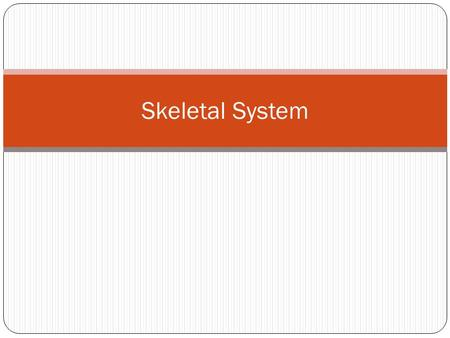 Skeletal System. Support All living organisms need a support structure One-cell organisms have cytoskeleton Arthropods have exoskeleton (exo = out)