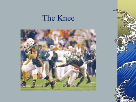 The Knee From the Sports Medicine Perspective Bony Anatomy Femur Patella Tibia Fibula.