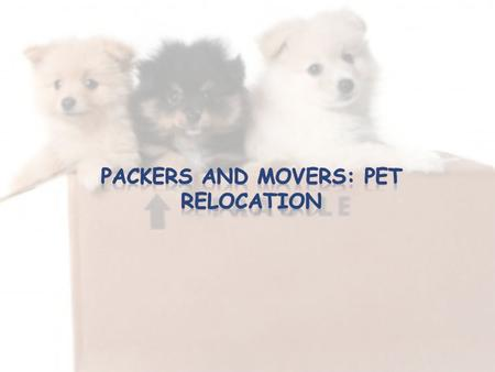 To make things easier for you, here is a list of the popular Packers and Movers in Bangalore that promise to move your furry friends in the best way possible.