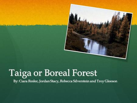 Taiga or Boreal Forest By: Ciara Resler, Jordan Stacy, Rebecca Silverstein and Troy Gleeson.