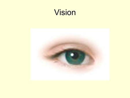 Vision The Eye Contains photoreceptors Contains accessory organs including eyelids, lacrimal apparatus, and muscles.