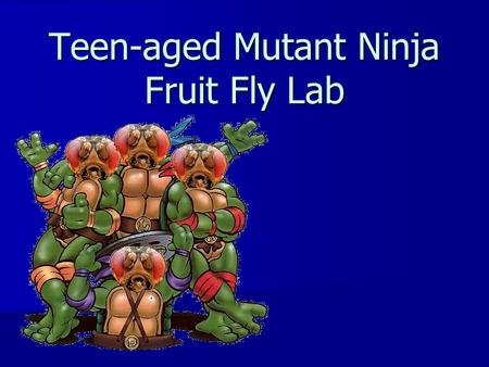 Teen-aged Mutant Ninja Fruit Fly Lab. Objectives The purpose of this activity is for students to demonstrate how the process of meiosis creates daughter.