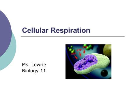 Cellular Respiration Ms. Lowrie Biology 11. Energy Transformation  Chemical energy in food converted into energy that cells can use Glucose to ATP 