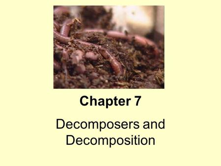 Decomposers and Decomposition