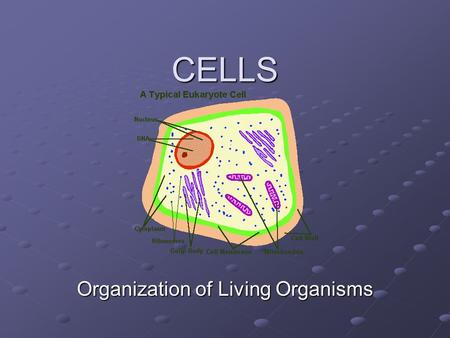 CELLS Organization of Living Organisms Lesson 1 Cell Theory.